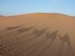 砂漠を散歩しましょう at night( ´,_ゝ`)プッ
